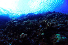 Underwater tropical sea view Royalty Free Stock Photography