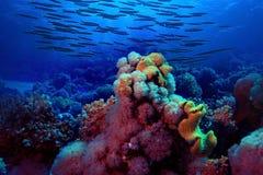 Underwater tropical sea view Stock Photos