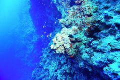Underwater tropical sea view Royalty Free Stock Images