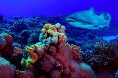Underwater tropical sea view Stock Image