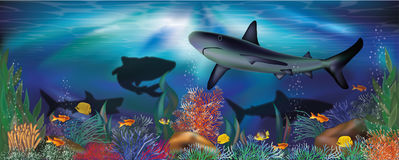 Underwater tropical wallpaper with Shark Royalty Free Stock Photo