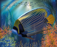 Underwater tropical world wallpaper Stock Images
