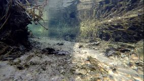 Underwater Trout Stream in Winter. Underwater of a small trout stream in winter.  The temperature was below freezing, but the spring fed stream stays open and stock footage