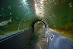 Underwater tunnel aquarium. Fish and Underwater tunnel aquarium royalty free stock photo