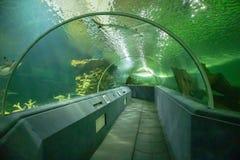 Underwater tunnel aquarium. Underwater tunnel at sea aquarium stock images