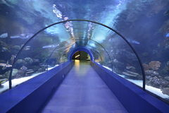Underwater tunnel aquarium, Antalya, Turkey. The longest tunnel in the world head under water. building an aquarium in the Turkish city of Antalya stock photography