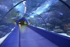 Underwater tunnel aquarium, Antalya, Turkey. The longest tunnel in the world head under water. building an aquarium in the Turkish city of Antalya royalty free stock photography