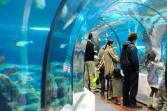 Underwater tunnel. BARCELONA, SPAIN, DECEMBER 30: Aquatic tunnel in the Barcelona Aquarium, on december 30, 2008 in Barcelona, Spain stock photography