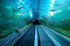 Underwater tunnel in big walk-in aquarium royalty free stock photography