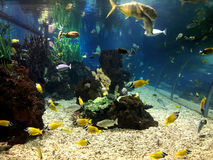 The Underwater tunnel in a large Aquarium.  royalty free stock photos
