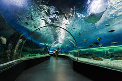 Underwater tunnel. MANILA, PHILIPPINES - MARCH 18: Underwater tunnel on March, 18, 2013, Manila, Philippines. In terms of floor space, oceanarium is larger than stock images