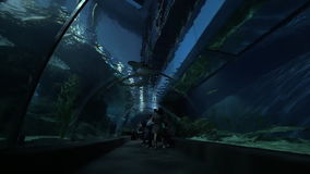 Underwater tunnel in oceanarium of Bangkok, Thailand. BANGKOK, THAILAND - NOVEMBER 02, 2015: Family with little children visiting oceanarium Siam Ocean World stock video