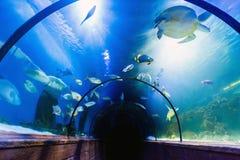 Underwater tunnel in oceanarium. Beautiful underwater tunnel in oceanarium royalty free stock images