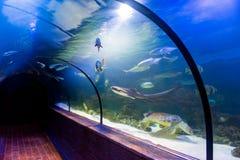 Underwater tunnel in oceanarium. Beautiful underwater tunnel in oceanarium royalty free stock photography