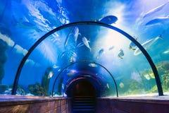 Underwater tunnel in oceanarium. Beautiful underwater tunnel in oceanarium stock photos