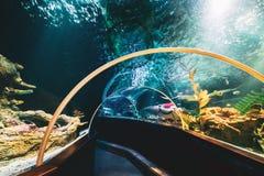 Underwater Tunnel In Oceanarium. Marine Life Attraction stock image