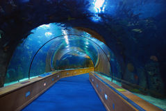 Underwater tunnel in Oceanografic, Valencia Spain. Underwater tunnel in the aquarium of the Oceanografic of the City of Arts and Sciences in Valencia, Spain stock photos