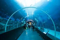 Underwater tunnel. At sea aquarium, Singapore stock images