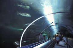 The underwater tunnel at Sydney Aquarium. The underwater tunnel is one of the main attractions of Sydney Aquarium, Australia stock images