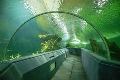 Underwater tunnel aquarium. Underwater tunnel in zoo aquarium royalty free stock images