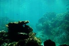 Underwater. Under water shot taken snorkeling stock image