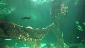Underwater Undersea And Ocean Floor. Stock video in 4k or HD resolution stock video footage