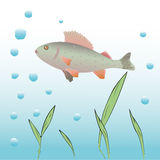 Underwater vector background. Stock Image