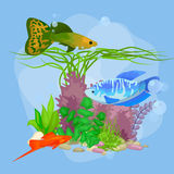 Underwater vector world background with fish, seaweed and bubbles. Illustration Stock Photo