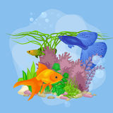 Underwater vector world background with fish, seaweed and bubbles. Illustration Royalty Free Stock Photos