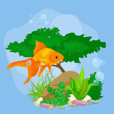 Underwater vector world background with fish, seaweed and bubbles. Illustration Stock Photos