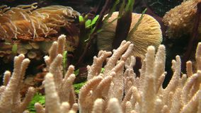 Underwater vegetation close up, steady cam stock footage