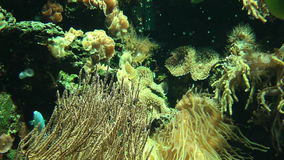 Underwater vegetation with colorful tropical fish stock video