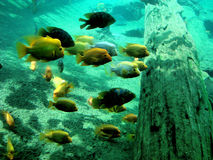 Underwater veiw. This is a underwater shot of crystal river and the fish stock images