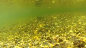 Underwater video of freshwater stream stock video
