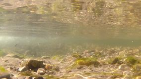 Underwater video of freshwater stream stock footage