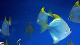 Underwater video of tropical fish stock footage