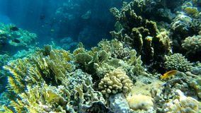 Underwater view, amazing coral reef with colorful fishes close up in Red Sea. Shooting in slow motion. Snorkeling in Egypt stock video