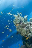 Underwater view of boat sihouettes, coral reef. Royalty Free Stock Photos