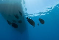 Underwater view of boat silhouette with fish. Stock Photo
