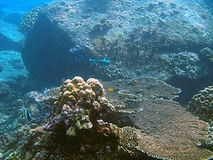 Underwater view of coral reef. Off Andaman beach, Thailand royalty free stock image