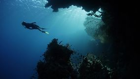 Underwater view of the coral reef full of fish. Freediver by the coral reef full of fish. Red Sea, Egypt stock footage