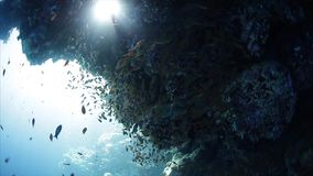 Underwater view of the coral reef full of fish. Red Sea, Egypt stock video footage
