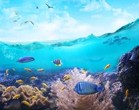 Marine life in tropical waters. Underwater view of the coral reef. Marine animals in tropical waters royalty free stock image