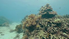 Underwater view coral reef on sea bottom and tropical fish. Beautiful underwater world with colorful coral reef and stock video