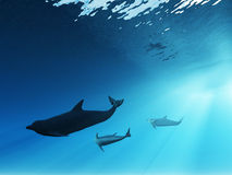 Underwater view of dolphins Royalty Free Stock Photography