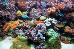Underwater view, fish, coral reef Stock Photo