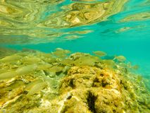 Underwater view of fish shoal stock photography