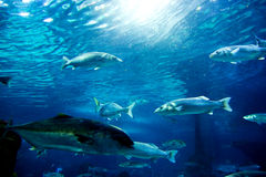 Underwater view, fish, sunlight Stock Photo
