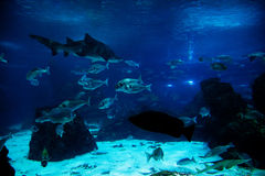 Underwater view, fish, sunlight Stock Image
