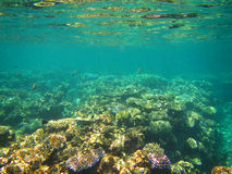 Underwater view, Great Barrier Reef, Australia Royalty Free Stock Photos